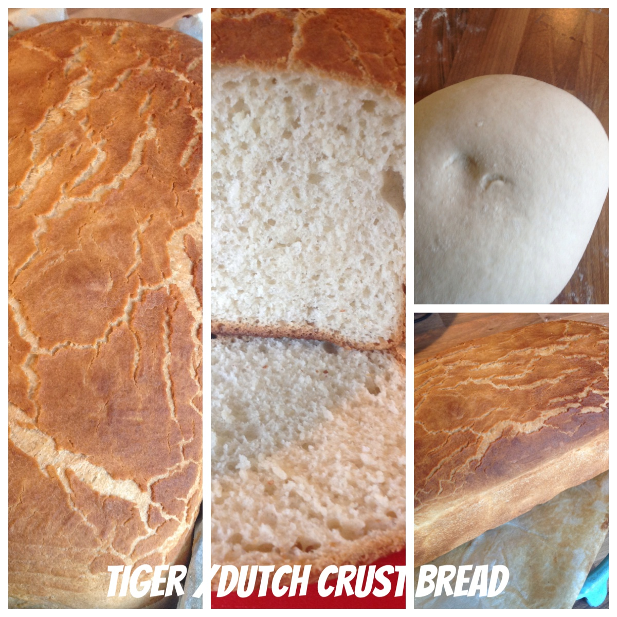 Crusty Bread with Tiger/Dutch Crust topping