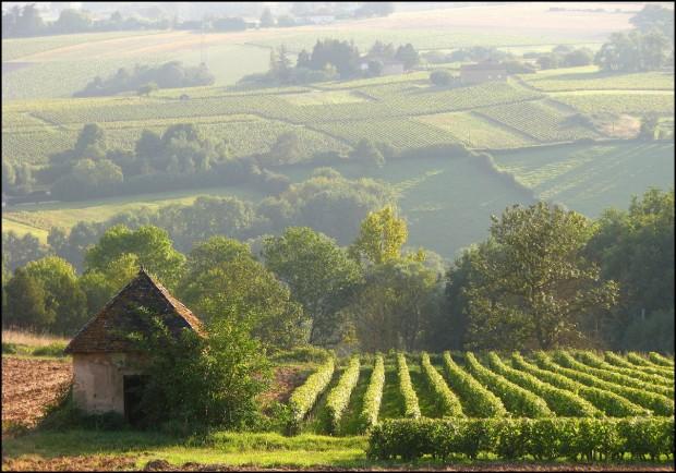 Sarthe Vineyards